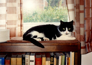 Arlington - Kitten on Bookcase (1992)