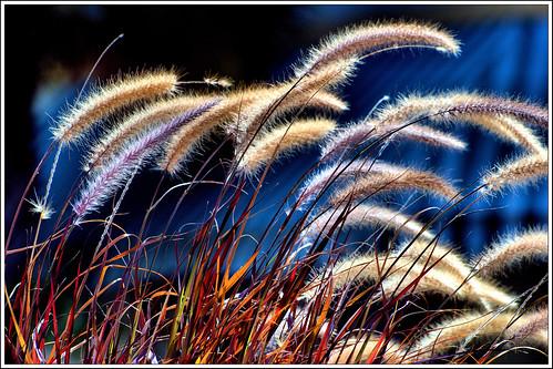 florida fernandinabeach ameliaisland beachgrasses nikond40x nikkor55200afslens