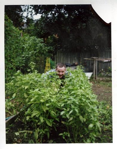 Harvesting the Basil by BunnySafari