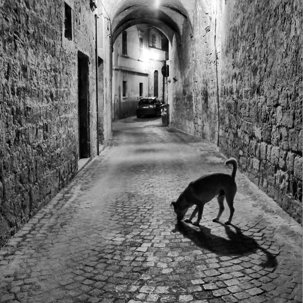Neanche un cane - Not a soul