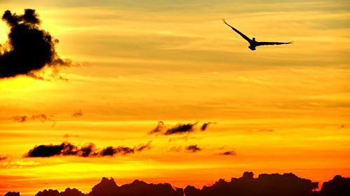 himmel pelikan dominica rosseau karibik