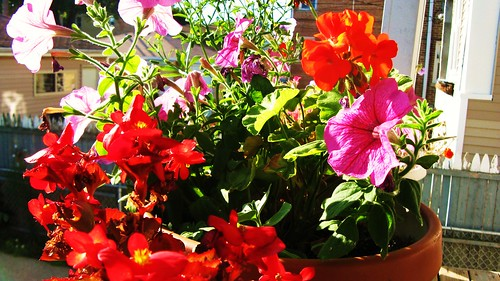 Morning sunshine on the potted rear porch plants. by Eddie from Chicago