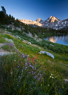 Rae Lakes Wildflowers II