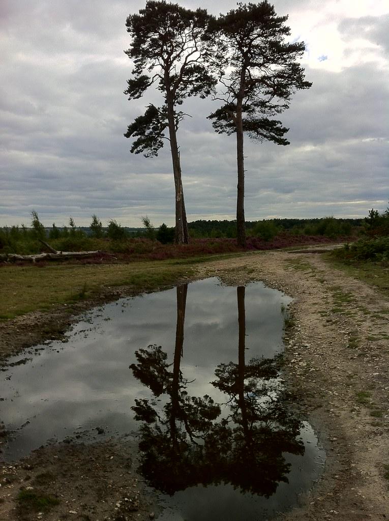 Cedars Ash Ranges