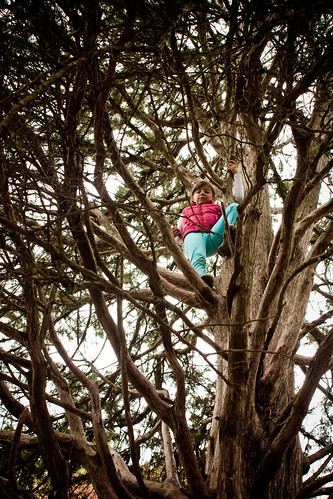 The risky kid climbs a tree
