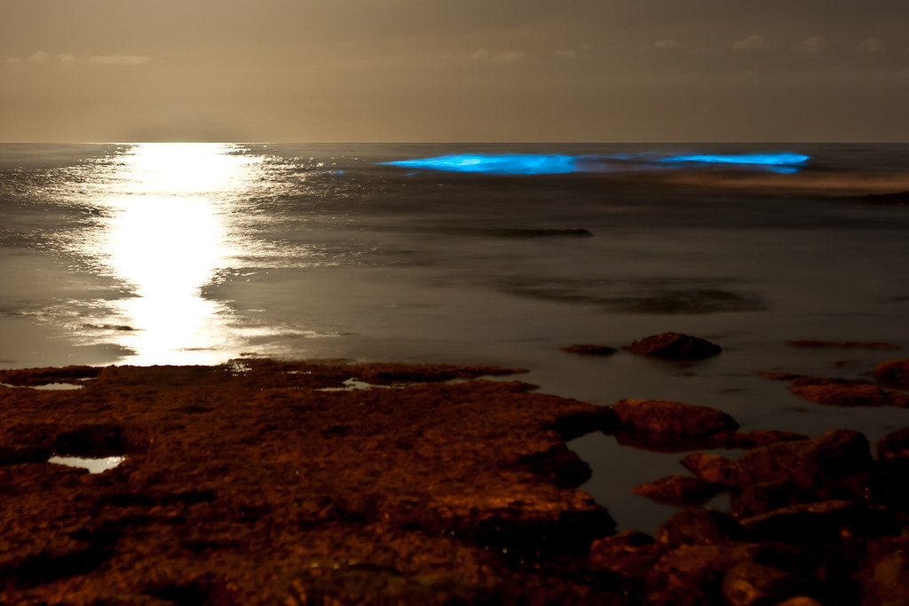 Bioluminescent tide (red tide) at La Jolla Cove glows. White area on the left is from the moon.