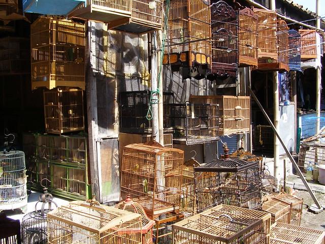 位於Jalan Ngasem的鳥市場,這裡是愛鳥之人一定會喜歡的地方!