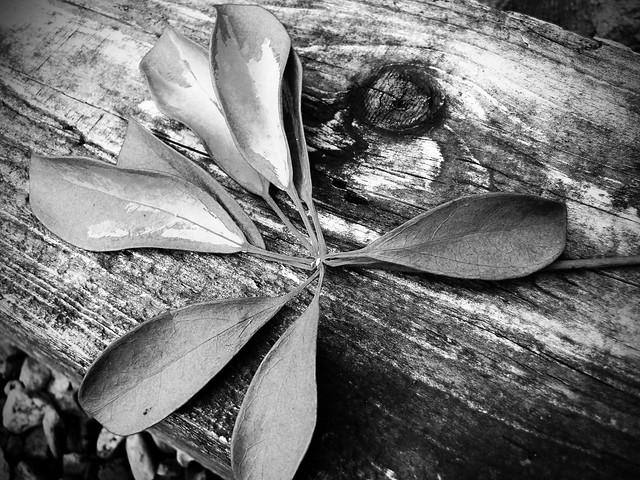 Monochrome Leaf