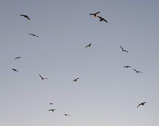 (289/365) Birds