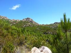 Piste de Castellu Muratu : retour en terrain clair après démaquisage