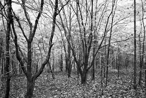 blackandwhite bw forest woods tennessee mobilewood