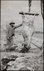 "Fresh beef, Wilcannia, NSW, between 1935-1937 / photographer Reverend Edward (""Ted"") Alexander Roberts"