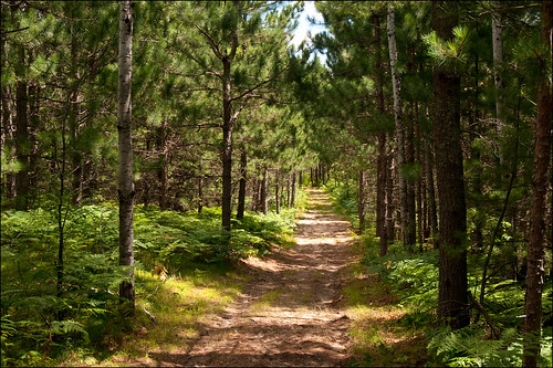 statepark trees sunlight raw shadows michigan trail dappled d300 fireroad grayling joeldinda hartwickpines