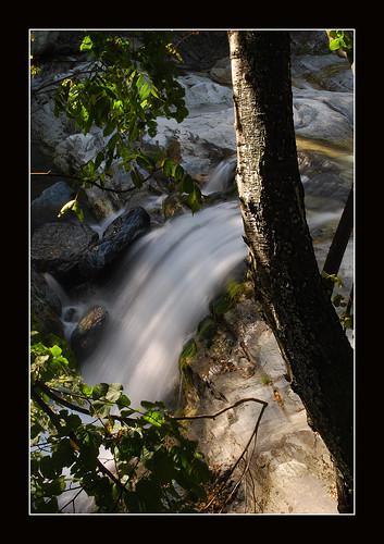 alberi fiume natura acqua muschio montagna bosco cascata