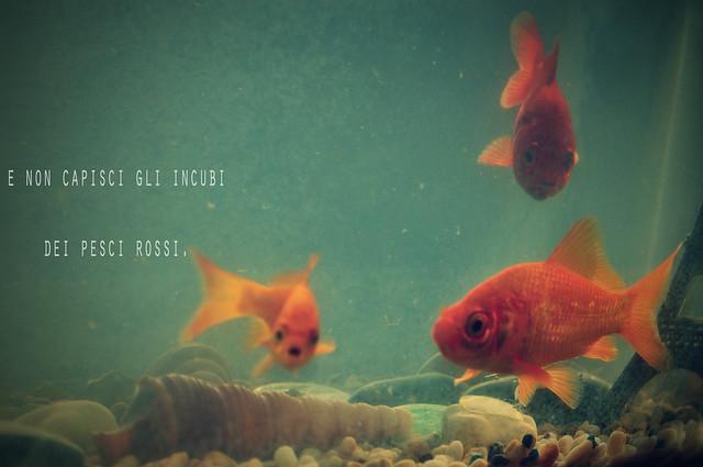 Lentiggini e cellulite e non capisci gli incubi dei pesci for Pesci rossi quanto vivono