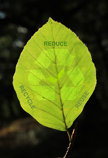 Beech Leaf Recycle