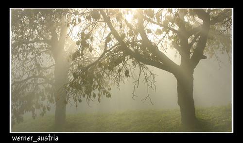 10-11 Misty morning_02816