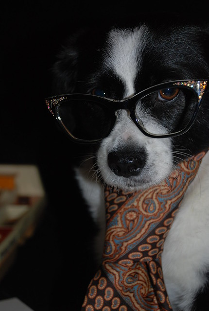 Loki in vintage tie and vintage specs