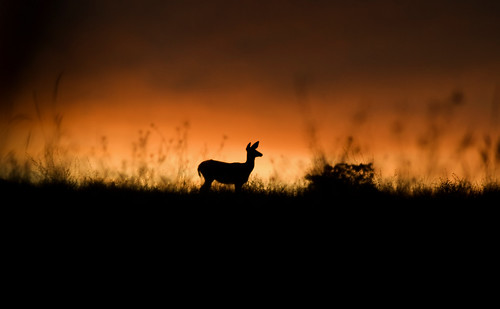 sunset canada sunrise golden bc deer sillouette kamloops