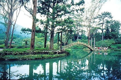 Y823溪頭大學池-竹橋