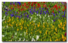 Bed of flowers...An abstract