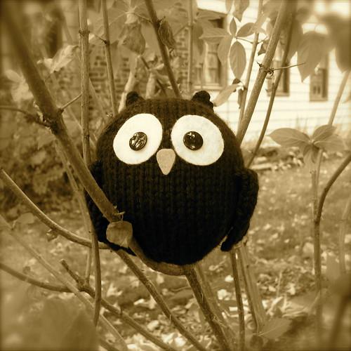 Little Black Owl