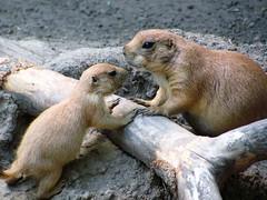 Saginaw Children's Zoo