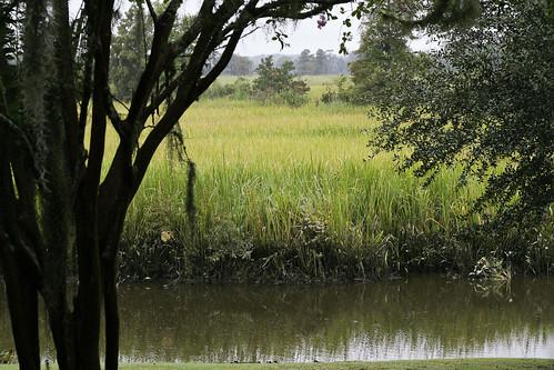 grass marsh intercoastalwaterway caledoniaplantationgrassmarsh