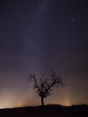stars & startrails