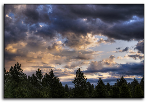 trees clouds sunrise washington spokane illumination