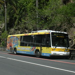 Brisbane Transport 566