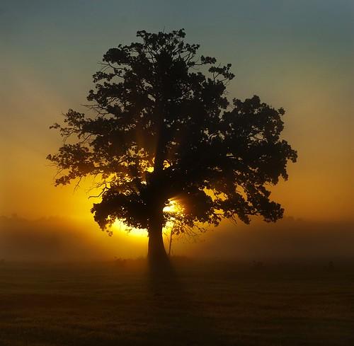 tree sunrise landscape nikon poland polska d200