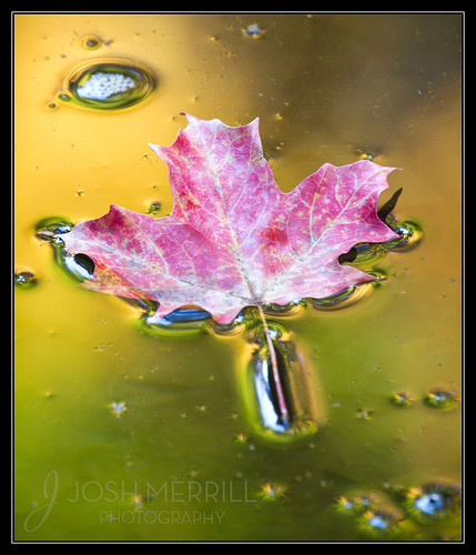 Liquid Autumn
