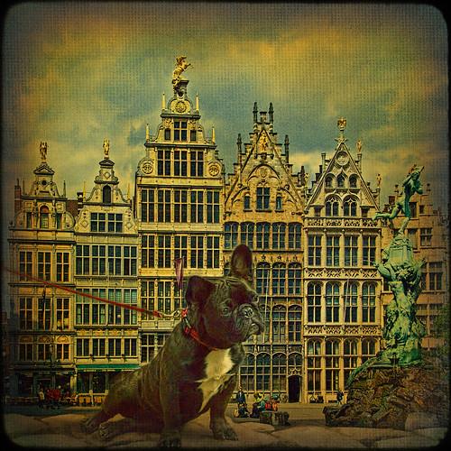 dog fountain belgium textures frenchbulldog antwerp hdr antwerpen grotemarkt idream dragondaggeraward magicunicornverybest magicunicornmasterpiece
