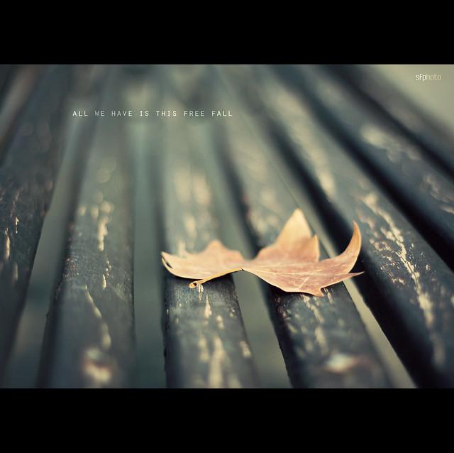 free fall haiku