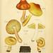 Fungorum qui in Bavaria et Palatinatu circa Ratisbonam nascuntur icones, nativis coloribus expressae. v.1-2.