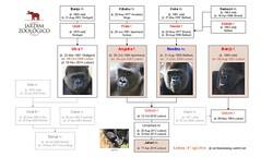 Gorilla Family - Lisbon (Jardim Zoológico de Lisboa)
