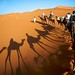 Erg Chebbi - The camel ride back after camping out. by citrineblue