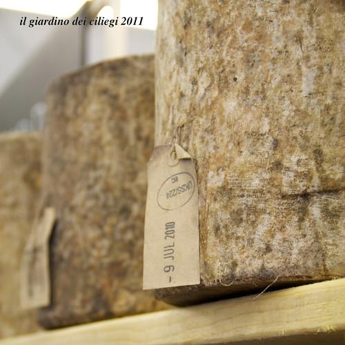 Il giardino dei ciliegi settembre 2011 - Il giardino dei ciliegi ...
