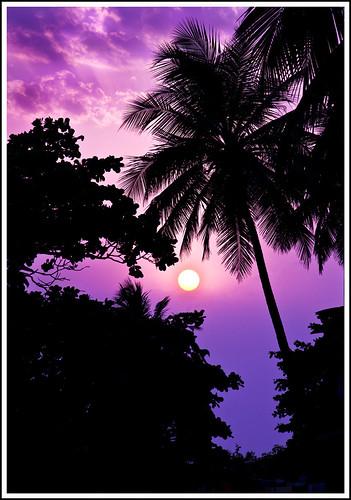 flowers trees sunset sky plants sun india tree beach nature silhouette clouds sunrise landscape nikon mumbai bandstand sal cloudscapes virji famouslandmark indiasunset d7000 salsmarine salvirji tngquickcritique