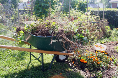 fall clean up for next year's gardening season