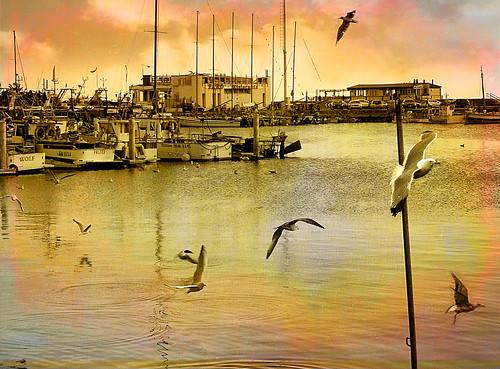 porto gabbiani adriatico romagna cattolica