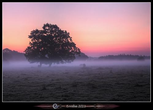 pink trees orange mist grass yellow fog sunrise canon belgium belgique belgië fields erlend 60d erroba robaye