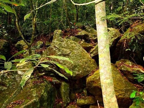 brazil 2011 nardy santaterezaes