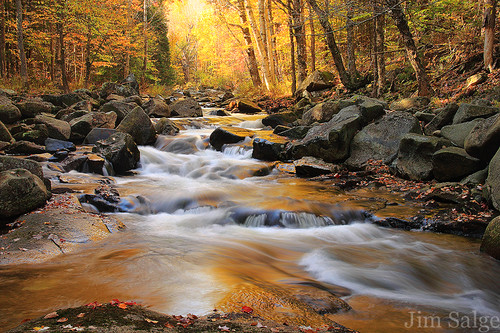 Stream's Golden Glow