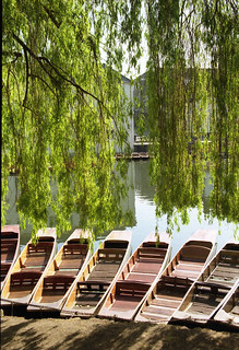 Punts and willows