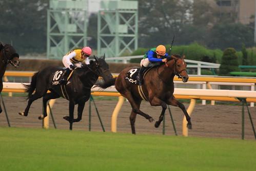 11R勝ち馬 トーセンレーヴ(N.ピンナ)2