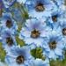 110611_344_Delphinium 'Raymond Lister'.jpg by Alan Buckingham