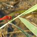 dragonfly by piero giuffrida | jebel