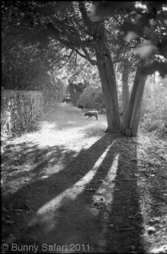 Long Summer Shadows by BunnySafari